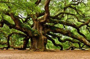 Магические свойства деревьев в северной традиции