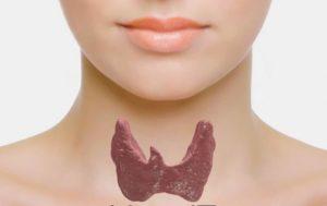 Щитовидная железа (проблемы) Лиз Бурбо
