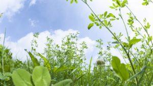 Как с помощью элементарной ботаники улучшить собственную жизнь