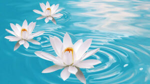 Медитация Мастера Кираэля «Освобождение от страхов»