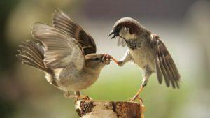 Влияние речи на карму человека