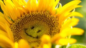 Создаём позитивный настрой